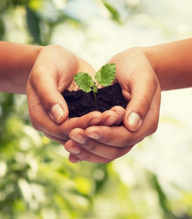 the  fertility: fertility, environment, ecology, agriculture and nature concept - closeup of woman hands holding plant in soil over green background