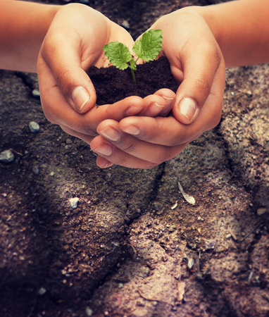 hands holding plant: fertility, environment, ecology, agriculture and nature concept - closeup of woman hands holding plant in soil over ground background