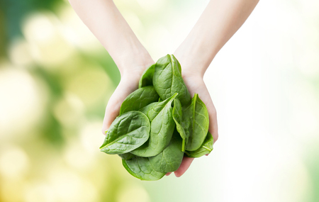 vegetarian food: healthy eating, dieting, vegetarian food and people concept - close up of woman hands holding spinach over green natural background Stock Photo