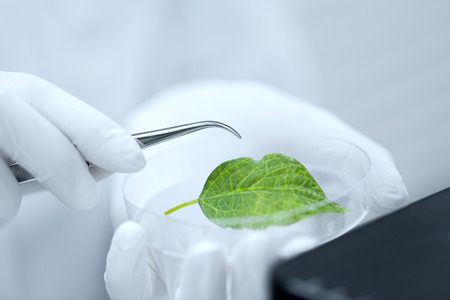 biology: science, chemistry, biology and people concept - close up of scientist hand with microscope and green leaf making research in clinical laboratory Stock Photo