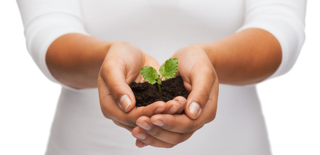hands holding plant: fertility and nature concept - closeup of woman hands holding plant in soil