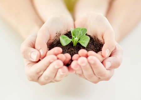 gente, la carità, la famiglia e il concetto di ecologia - vicino di bambini e genitori mani a coppa che tengono terreno con verde germoglio a casa