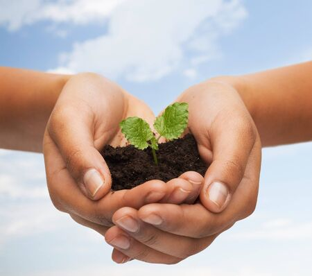the  fertility: fertility, environment, ecology, agriculture and nature concept - closeup of woman hands holding plant in soil over blue sky and grass background