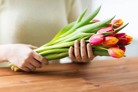 red tulip: people, holidays and gardening concept - close up of woman holding tulip flowers