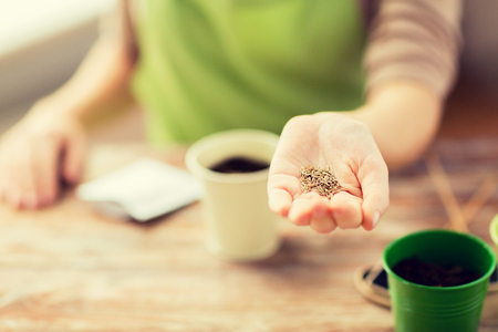 seeding: people, gardening, seeding and profession concept - close up of woman hand holding and showing seeds
