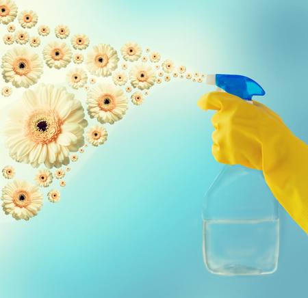 people, housework, purity and housekeeping concept - close up of hand with cleanser spraying over blue background with gerbera flowers