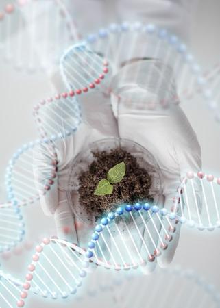 la ciencia, la biología, la ecología, la investigación y el concepto de la gente - cerca de las manos del científico que sostiene placa de Petri con muestra de la planta de bio laboratorio y estructura de la molécula de ADN