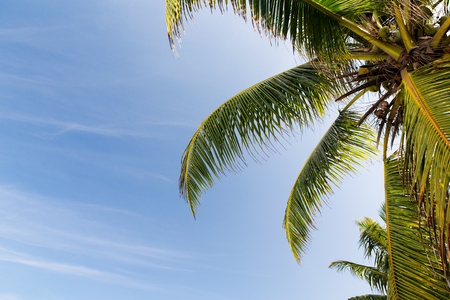 travel, tourism, vacation, nature and summer holidays concept - cocoa palm tree and blue sky