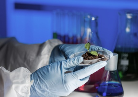 petri: science, biology, ecology, research and people concept - close up of scientist hands holding petri dish with plant and soil sample in bio laboratory Stock Photo