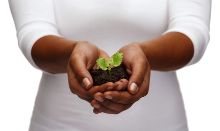 charity, environment, ecology, agriculture and nature concept - closeup of african american woman hands holding plant in soil Foto de archivo