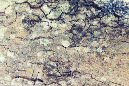 bark background: background and texture concept - tree trunk bark