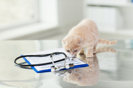 a medical examination: medicine, pets, animals, cats and health care concept - close up of scottish fold kitten and stethoscope with clipboard on table at vet clinic Stock Photo