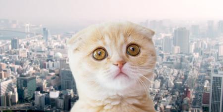 huisdieren, dakloze dieren en kattenconcept - sluit omhoog van ongelukkig Schots vouwenkatje over stadsachtergrond