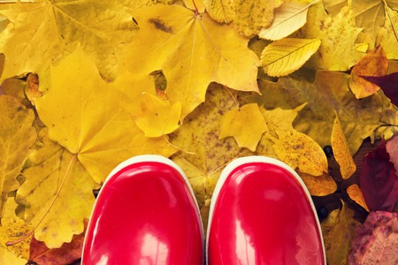 watertight: footwear, autumn and season concept - close up of red rubber boots on fallen yellow autumn leaves