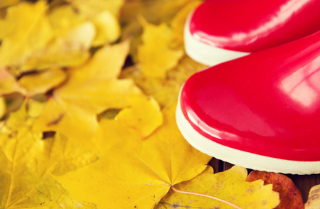 botas de lluvia: footwear, autumn and season concept - close up of red rubber boots on fallen yellow autumn leaves