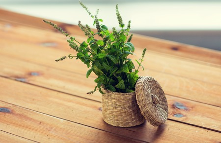 wooden basket: botany, summer, gardening and herbs concept - close up of fresh melissa in wicker basket on wooden table
