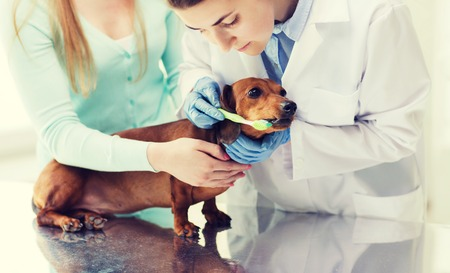 dental health: medicine, pet, animals, health care and people concept - woman with dachshund and veterinarian doctor brushing dog teeth with toothbrush at vet clinic