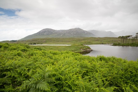 irish countryside: nature and landscape concept - view to to island in lake or river in ireland valley