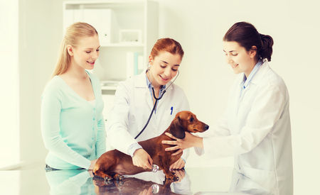 animal health: medicine, pet, animal, health care and people concept - happy woman and veterinarian doctor with stethoscope checking up dachshund dog health at vet clinic Stock Photo