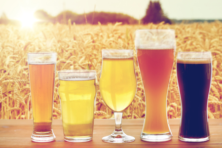 porter: brewery, drinks and alcohol concept - close up of different beers in glasses on table over cereal field background