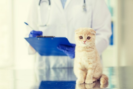 kitties: medicine, pet, animals, health care and people concept - close up of veterinarian doctor scottish fold kitten and clipboard at vet clinic