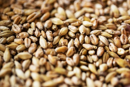 agriculture, farming, prosperity, harvest and rural economy concept - close up of malt or cereal grains