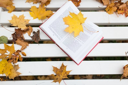 season, education and literature concept - open book on bench in autumn park Stock Photo