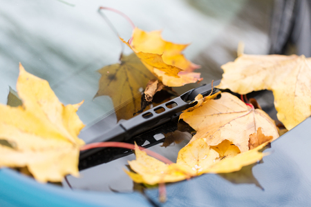 motor cars: season and transport concept - close up of car wiper with autumn maple leaves on windshield