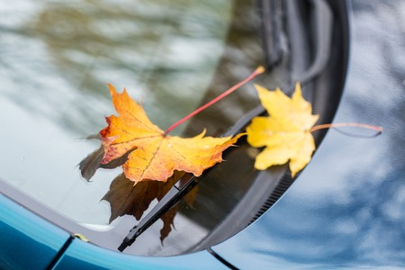 wiper: season and transport concept - close up of car wiper with autumn maple leaves on windshield