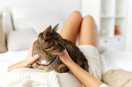 pets, comfort, rest and people concept - young woman with cat lying in bed at home