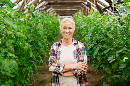 smiling woman in a greenhouse: farming, gardening, agriculture and people concept - happy senior woman at farm greenhouse Stock Photo