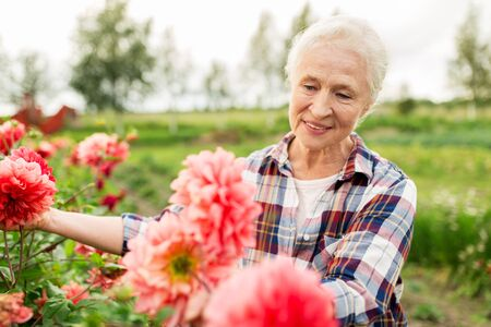 senior woman: farming, gardening and people concept - happy senior woman with flowers blooming at summer garden