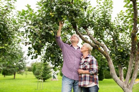 albero da frutto: farming, gardening, harvesting and people concept - senior couple with apple tree at summer garden Archivio Fotografico