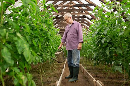 bailer: farming, gardening, agriculture and people concept - happy senior man with watering can at farm greenhouse