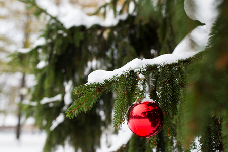 red christmas ball: winter holidays and decoration concept - red christmas ball on fir tree branch covered with snow