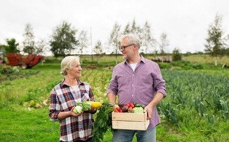farming, gardening, agriculture, harvesting and people concept - senior couple with box of vegetables at farm Stock Photo