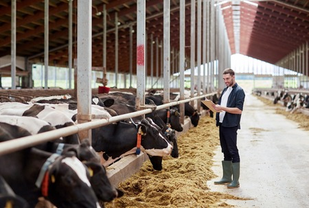 man with clipboard and cows at dairy farm cowshed Stock Photo
