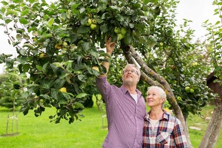 albero da frutto: coppia senior con albero di mele in giardino d'estate Archivio Fotografico