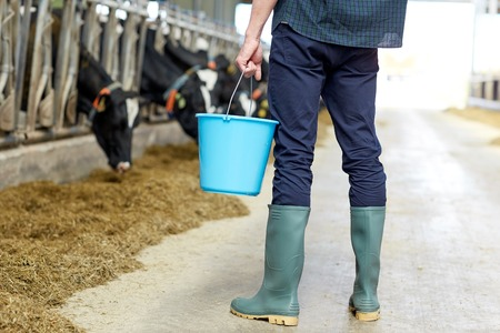 industry: agriculture industry, farming, people and animal husbandry concept - young man or farmer with bucket in cowshed and cows on dairy farm