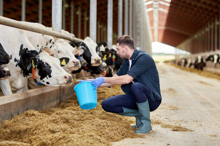 man with cows and bucket in cowshed on dairy farm Stock Photo