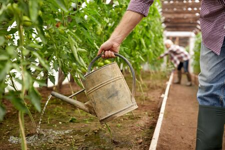bailer: farming, gardening, agriculture and people concept - senior man with watering can at farm greenhouse Stock Photo