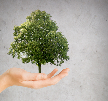 hand holding green oak tree over gray background photo