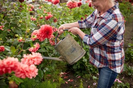 bailer: senior woman watering flowers at summer garden
