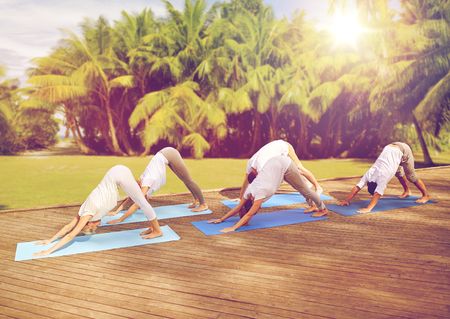 group of people making yoga dog pose outdoors