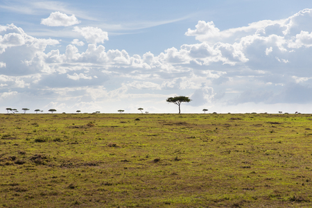landscape with acacia trees in savannah at africa Stock Photo