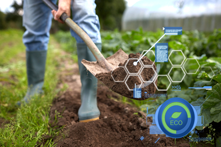 organic farming, agriculture and people concept - man with shovel digging garden bed or farm Фото со стока