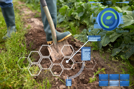 organic farming, agriculture and people concept - farmer with shovel digging garden bed or farm