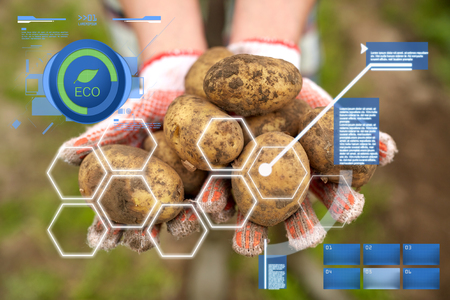 organic farming, agriculture and people concept - farmer holding potatoes at farm Фото со стока