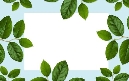 blank space: nature, organic and botany concept - white blank space and green leaves on blue background