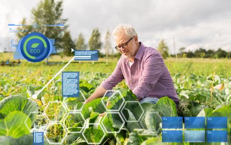 senior man growing white cabbage at farm Stock Photo